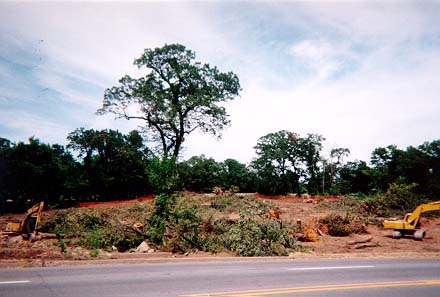 Clearing Site 2