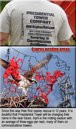 Tower Osprey Nesting